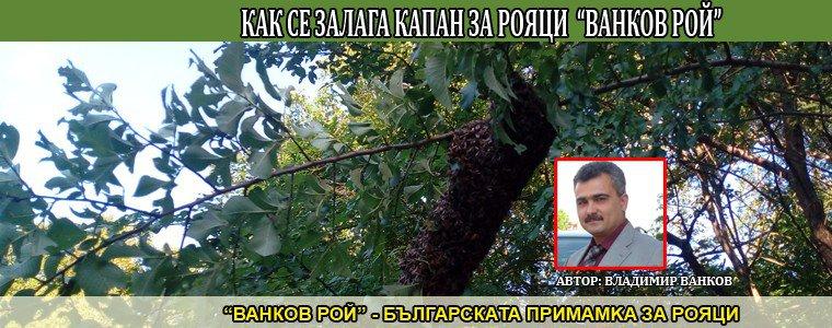 """Как се залага примамка за пчелни рояци """"Ванков Рой"""""""